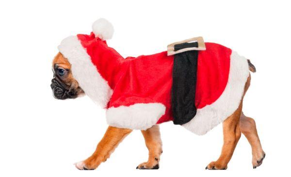 Hundemantel Weihnachtskostüm