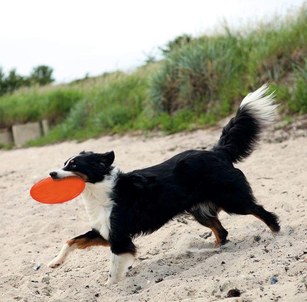 Dog Disc - Schwimmspielzeug
