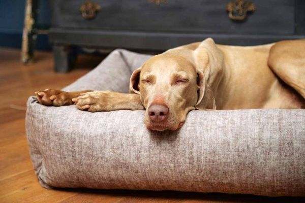 Hunde-Liegebett